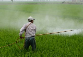 insecticide linked to autism